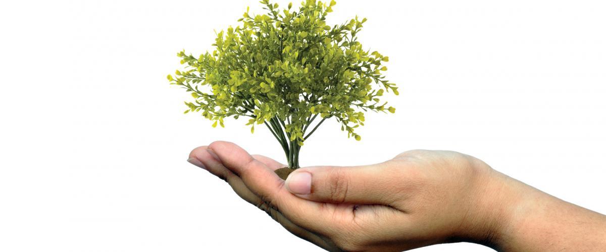 Umweltorientiertes Handeln ist ein zentraler Bestandteil der Unternehmenspolitik von Höhne-Grass